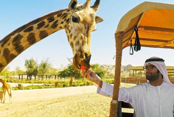 Зоопарк Al Ain Zoo в Абу Даби