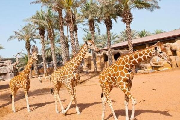 зоопарк ОАЭ